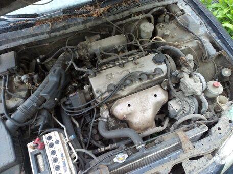 Купить Honda Accord пробег 10 000.00 км 1995 год выпуска