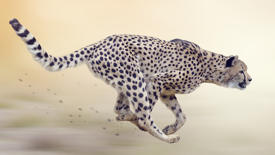 CatBoost representation