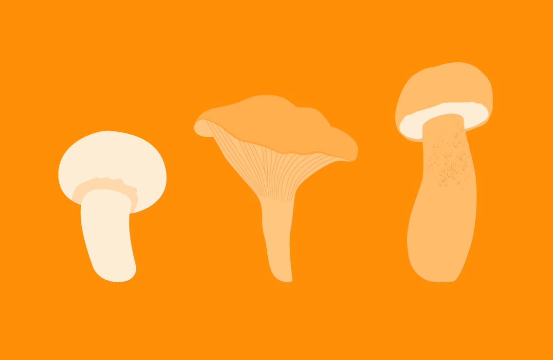 Как искать грибы Яндексом