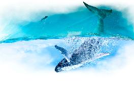 Всесвітній день китів і дельфінів