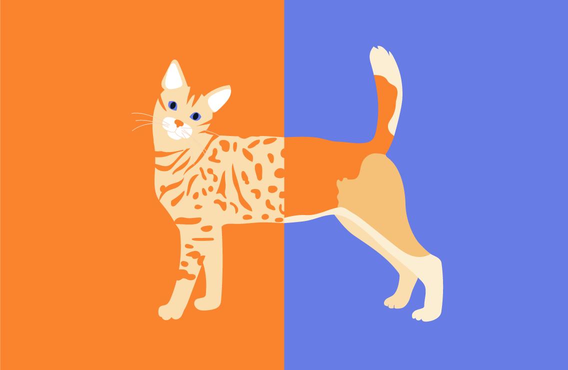 О кошках исобаках