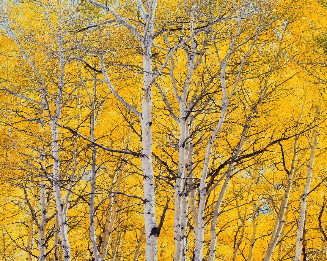 «Фотопейзажи Кристофера Беркетта вГалерее классической фотографии— до15сентября» фото 2