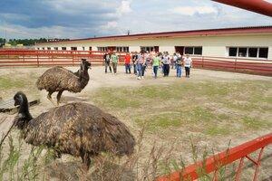 «Русский страус» фото 1