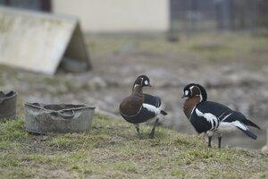 «Парк птиц Воробьи» фото 1