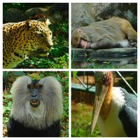 Thiruvananthapuram Zoo