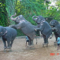 National Zoological Gardens of Sri Lanka