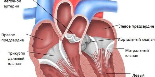 Митральная регургитация (митральная недостаточность). Информация для  пациентов.