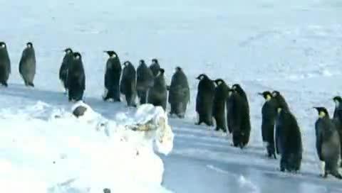Ужасы сексуальной жизни пингвинов