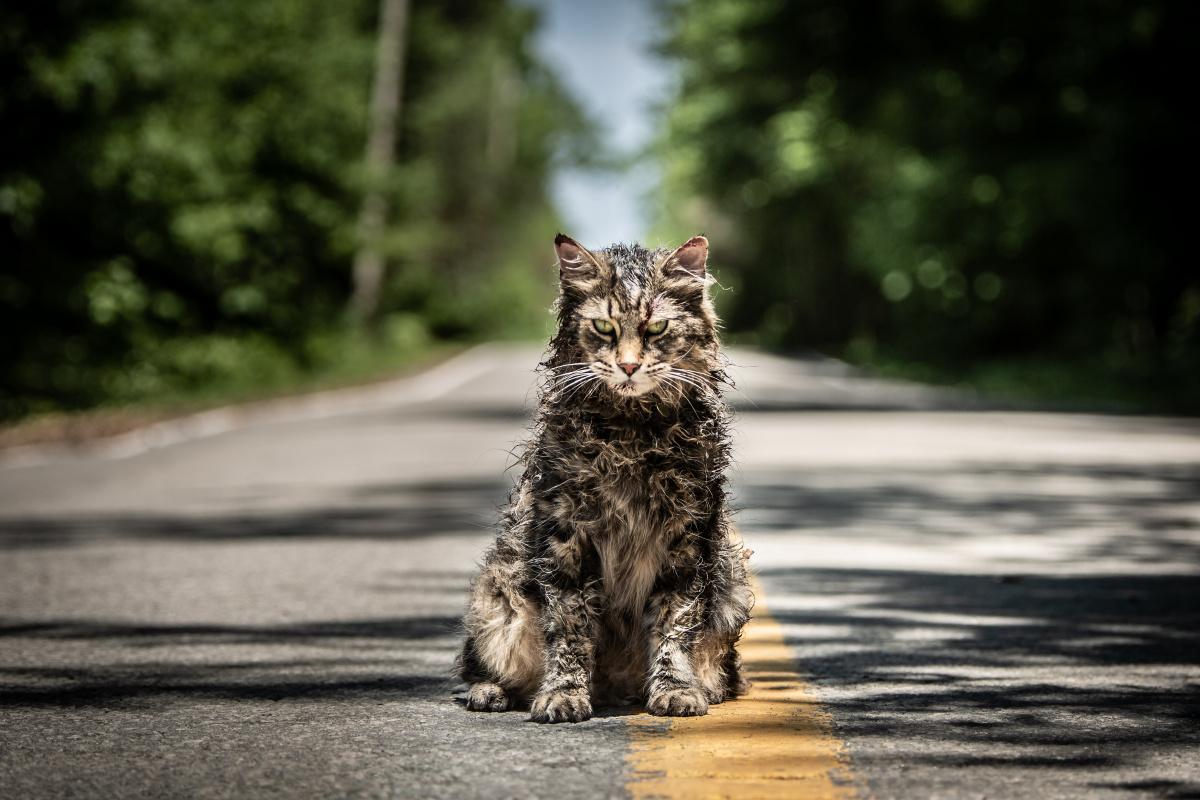 Кладбище домашних животных – фильм 2019 | дата выхода, актеры в 2019 году