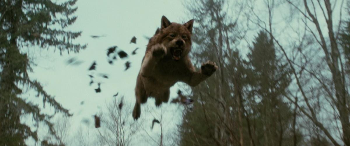 волков из фильма сумерки