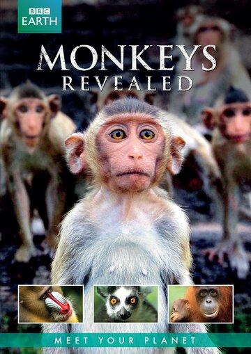 Всё о мире обезьян (Monkeys Revealed)