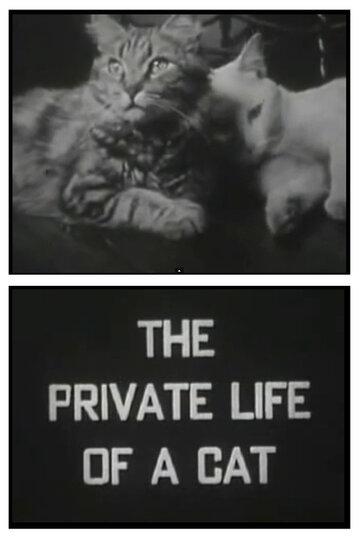 Личная жизнь кота (1944)