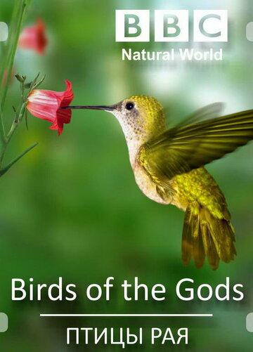 Птицы рая