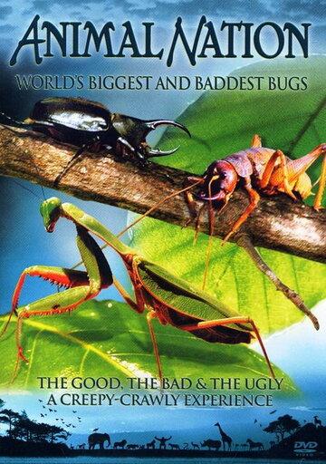 Самые большие и страшные жуки в мире (видео)