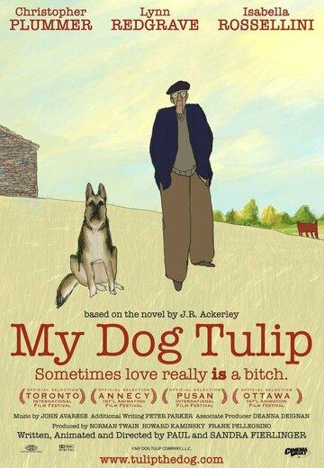Моя собака Тюльпан