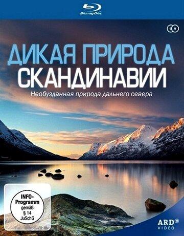 Дикая природа Скандинавии (2011)