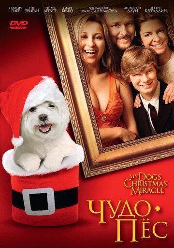 Чудо-пес (2011)