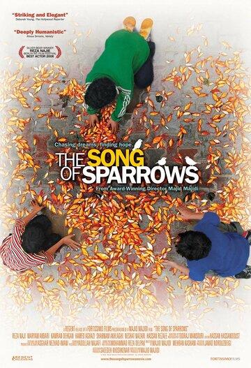 Песня соловьев 2008