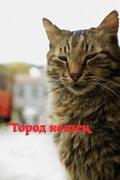 Новое видео: Город кошек