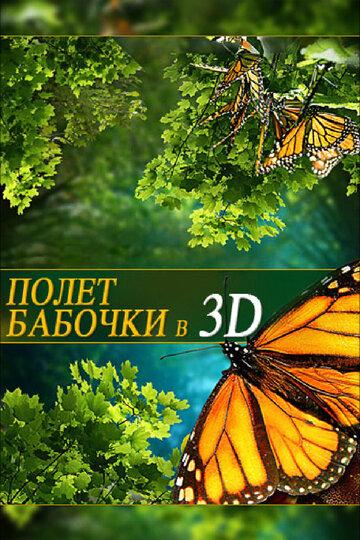 Полет бабочки 3D