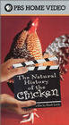 The Natural History of the Chicken (2000)