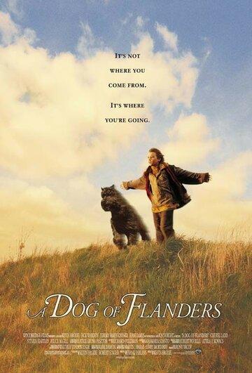 Фландрийский пес
