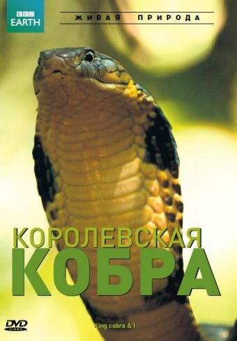 скачать фильм кобра через торрент