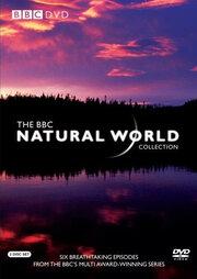 BBC: Живой мир (1983)