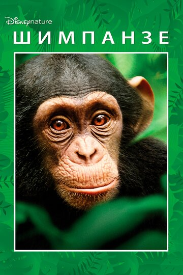 Шимпанзе 2012