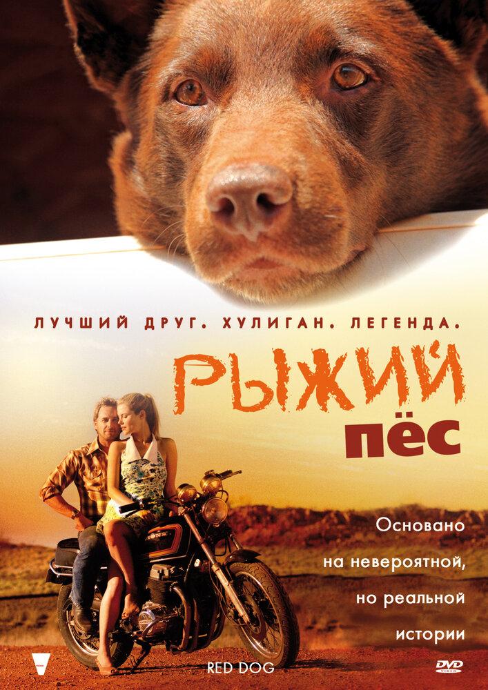 Рыжий пес - 2016