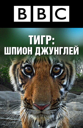 KP ID КиноПоиск 446085