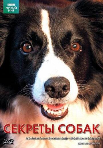 BBC: Секреты собак