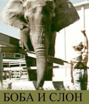 Фильмы Боба и слон смотреть онлайн