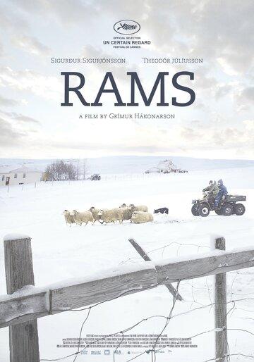 Бараны / Hrútar / Rams (2015)