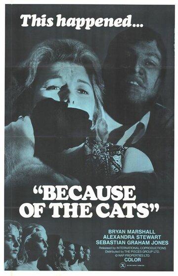 Из-за кошек (1973)