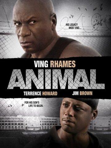 Животное (видео)
