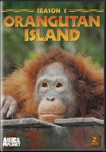 Остров орангутанов