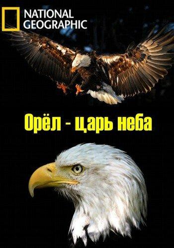 Орёл – царь неба