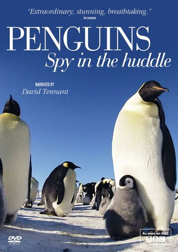 BBC. Пингвины: Шпион в толпе (2013)