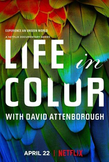 Жизнь в цвете с Дэвидом Аттенборо 2021 | МоеКино