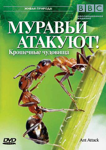 KP ID КиноПоиск 271754