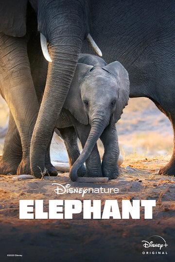 Слон (2020)
