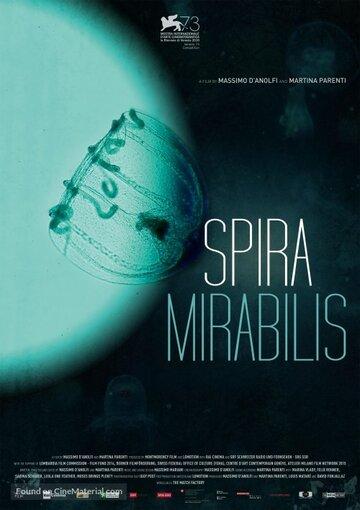 Удивительная спираль (Spira Mirabilis)