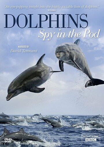 Дельфины скрытой камерой 2014