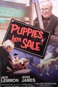 Щенки на продажу (Puppies for Sale)
