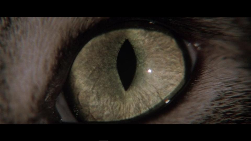 «Кошачий глаз»