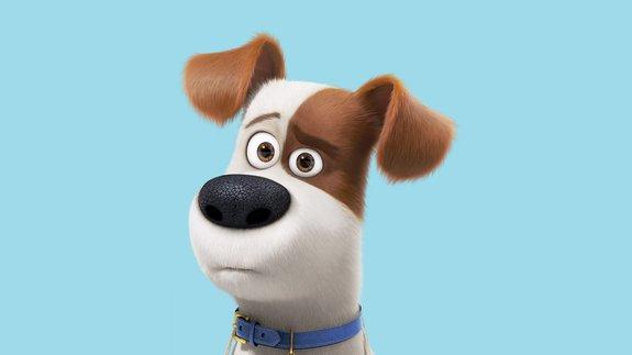 Трейлер «Тайной жизни домашних животных 2»: Никаких проблем с поведением