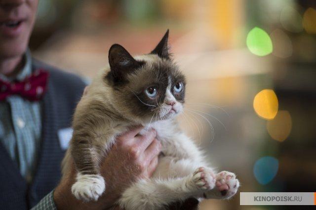 «Худшее Рождество сердитой кошки»