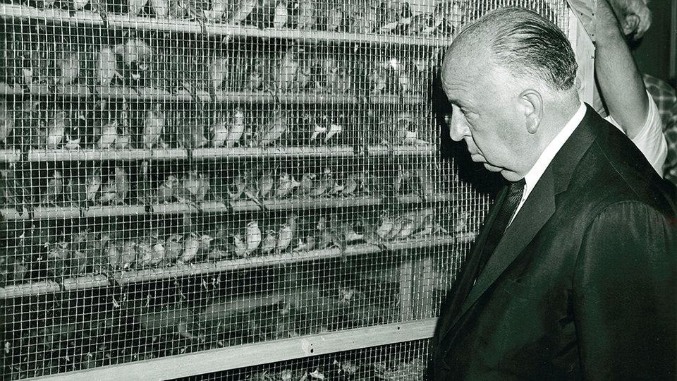 Альфред Хичкок на кастинге фильма «Птицы»