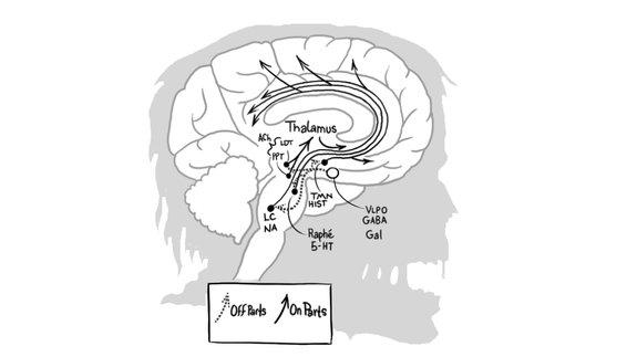 Гипотеза авторов книги заключается в том, что зомби навечно застряли на границе между сном и бодрствованием